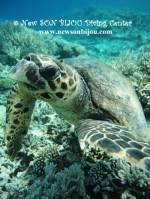 <p>turtle - www.newsonbijou.com</p>