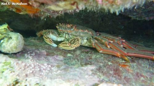 lobster_abel_tasman_np.jpg
