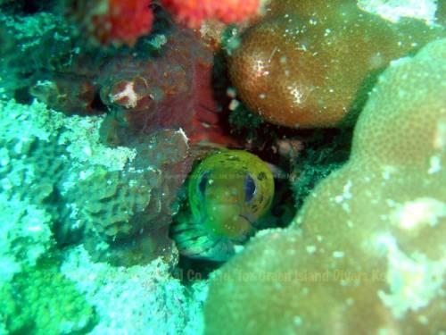 koh_mak_underwater_fish03.jpg