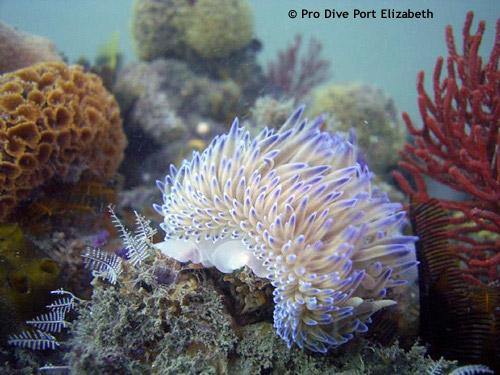 soft_corals2.jpg