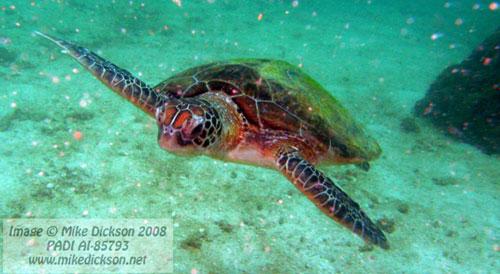 colorfull_turtle.jpg