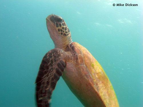 rising_turtle.jpg