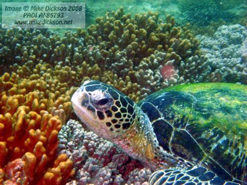 turtle_bandar_khayran.jpg
