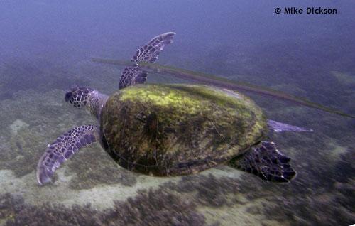 turtle_musqat_oman.jpg