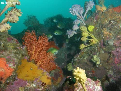 sponge_garden_shell_harbour.jpg