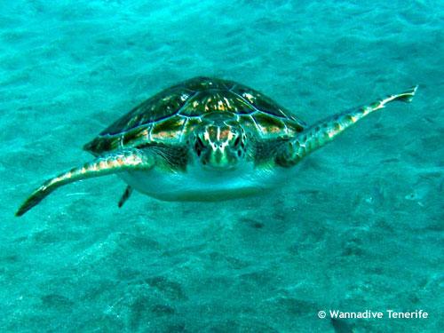 green_turtle_stingray_city.jpg