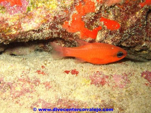 nice_red_small_aquarium_fish.jpg