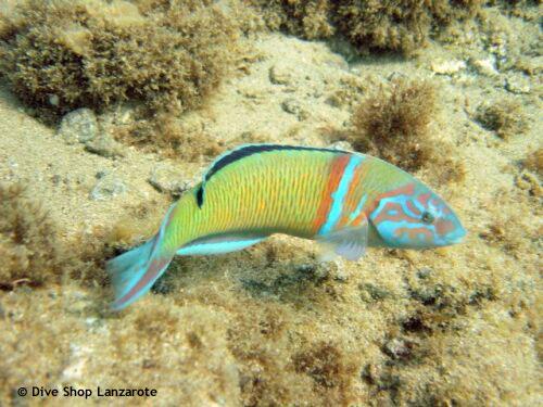 rainbow_colored_fish.jpg