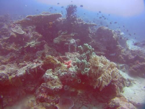 coral_block.jpg