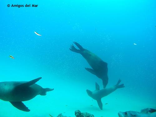 sea_lions_los_cabos.jpg