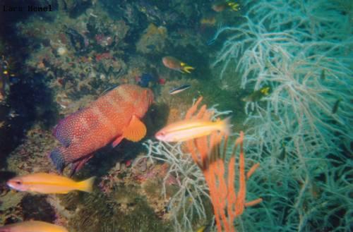 yongala_wreck_fish_life.jpg