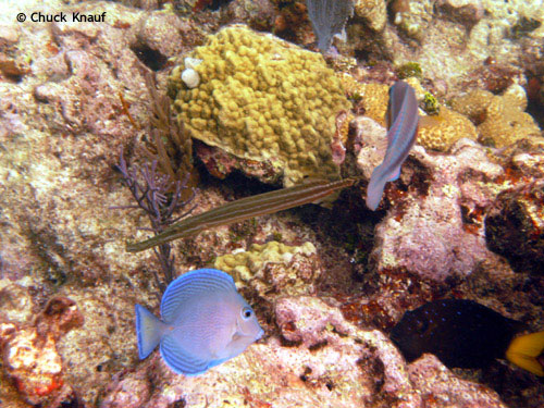 aquarium_fish_dry_rocks.jpg