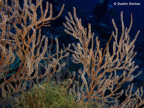 delap_point_corals.jpg