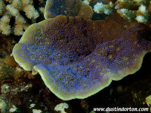 diving_marshall_islands_delap_point.jpg