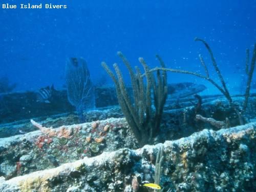 kennedy_wreck_diving.jpg