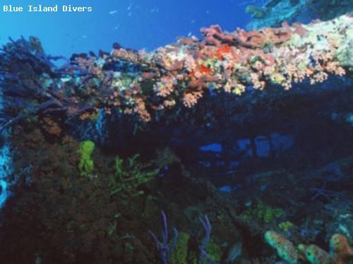 ss_grainton_corals.jpg