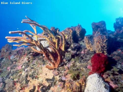 wit_service_hard_corals.jpg