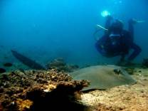 <p>Patrik Engstrom and the feathertail sting ray, Fahal Island 2008r</p>