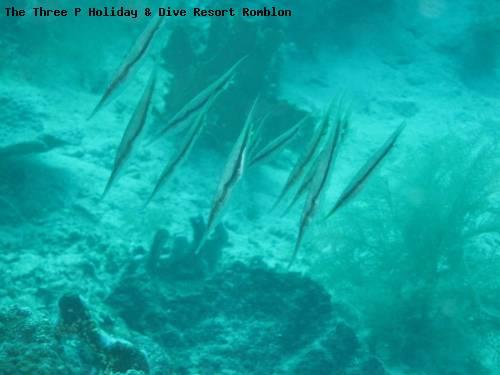the_three_p_holiday_dive_resort_romblon_83.jpg