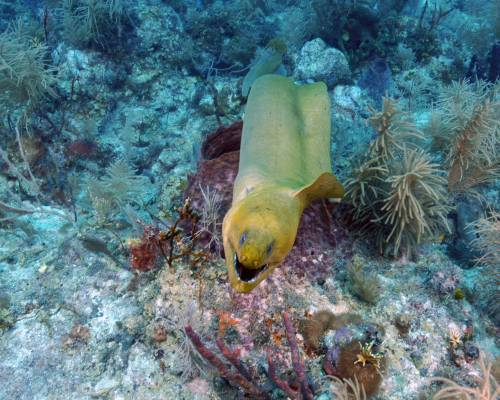 eel_at_conch_2_07112010.jpg