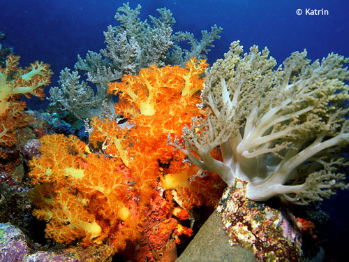 soft_corals_at_batu_gasoh.jpg