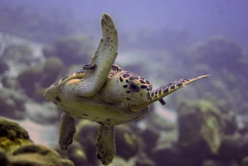 bonaire_january_2011_turtle_4.jpg