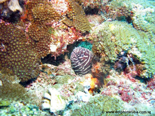 coral_moray_eel.jpg