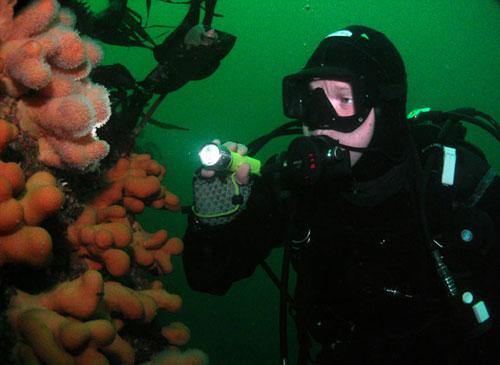 diver_at_inis_turk.jpg