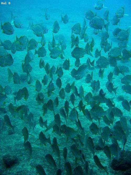 group_fish_club_naval_dive.jpg