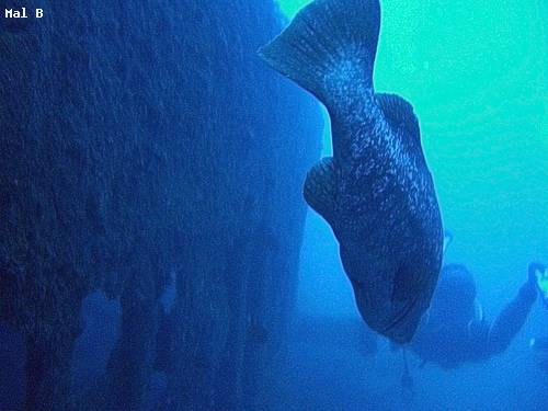pronto_huge_fish_madeira.jpg