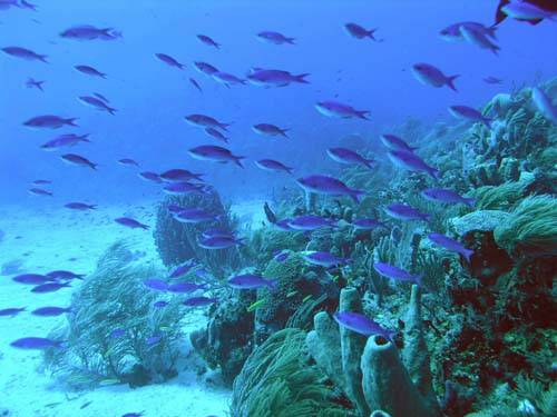 creole_wrasse_at_texas_500px.jpg