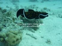 <p>yellow spotted flatworm - www.newsonbijou.com</p>