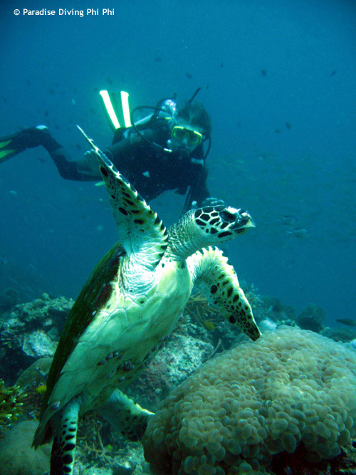 picture_turtle_with_diver.jpg
