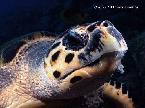 swisscare_housereef_turtle.jpg