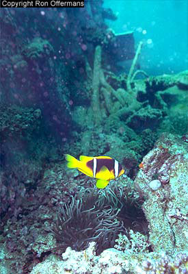 coral_at_kimon_wreck.jpg