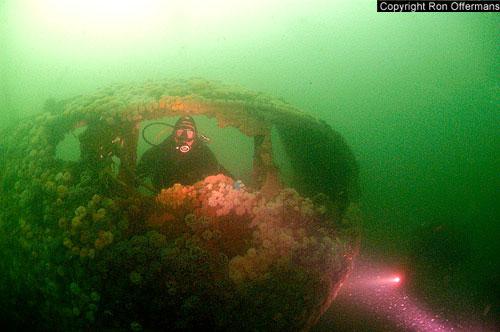 diving_swift_ijm54.jpg
