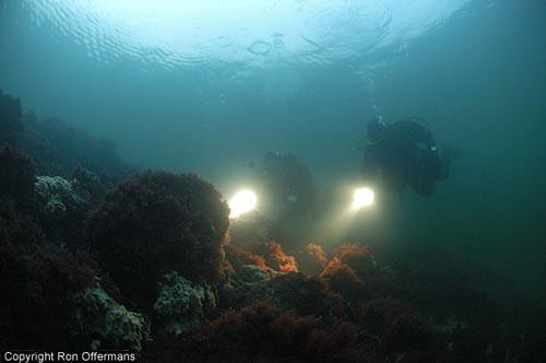 onderwater_dreischor.jpg