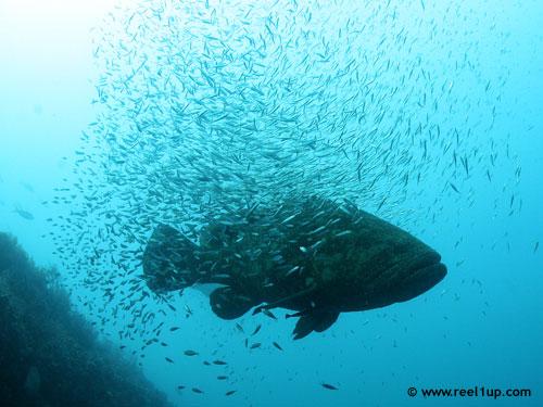 big_fish_tiny_fish.jpg