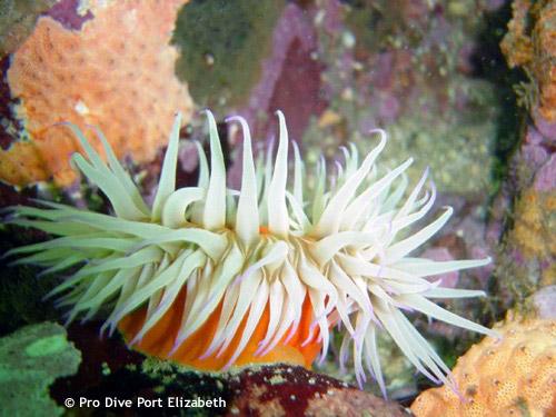 soft_corals.jpg