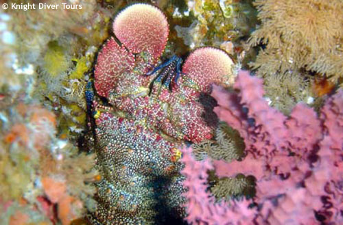 pink_waving_soft_coral.jpg
