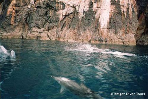 poorknights_dolphins_near_boat.jpg