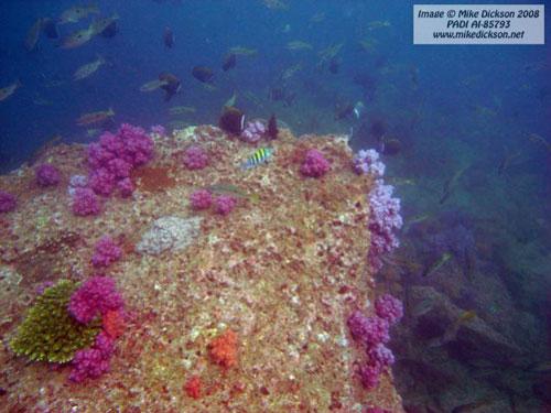 coral_cockleshell_bay.jpg