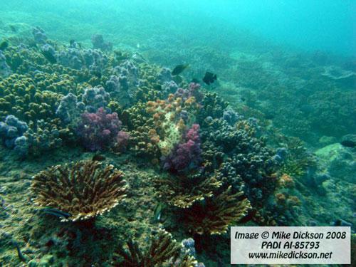 coral_reef_mazens.jpg