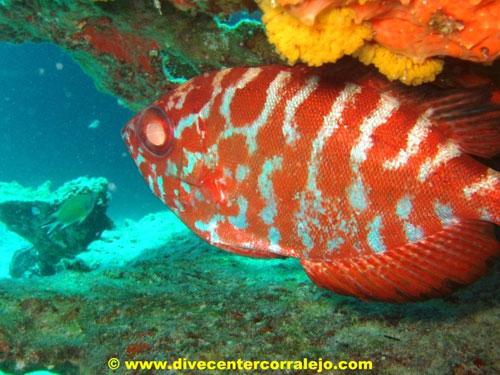 el_bajon_del_rio_fish.jpg