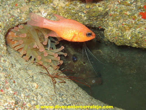 moray_anemone_red_fish.jpg