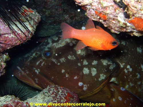 moray_eel_with_red_fish.jpg