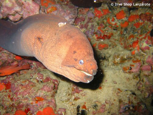 moray_eel_bluehole.jpg
