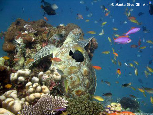 coral_fish_diversity_halik.jpg