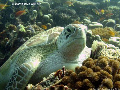 turtle_resting_meno_wall.jpg