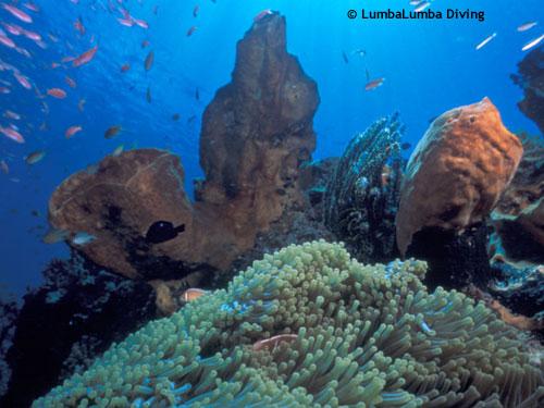 reefscene_lekuan_anemones.jpg